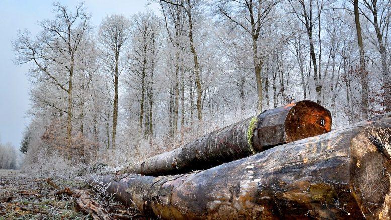 bûche, tronc, bois, grume du bois traitement, bois protection